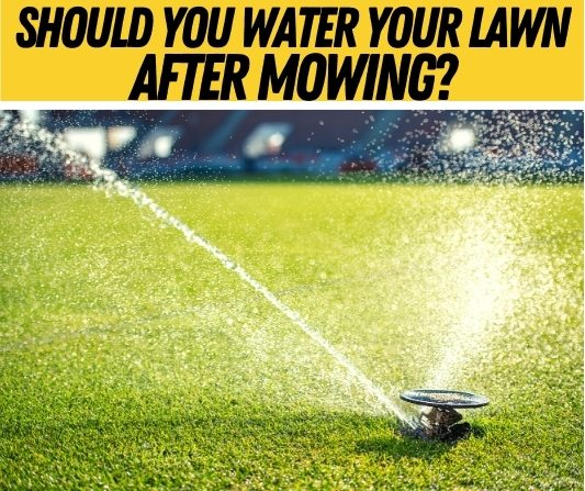 Should you water your lawn after mowing