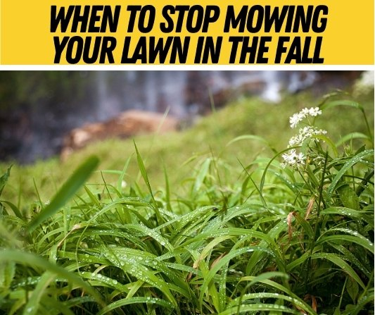 When To Stop Mowing Your Lawn in the fall
